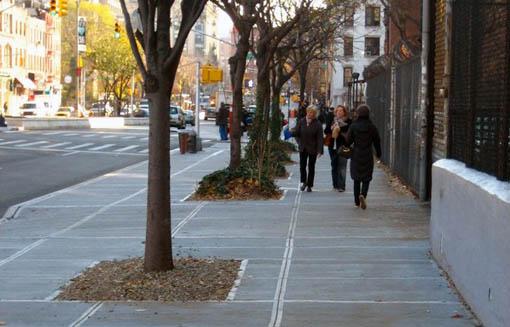 Sidewalk trees