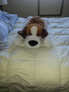 Rufus the stuffed dog