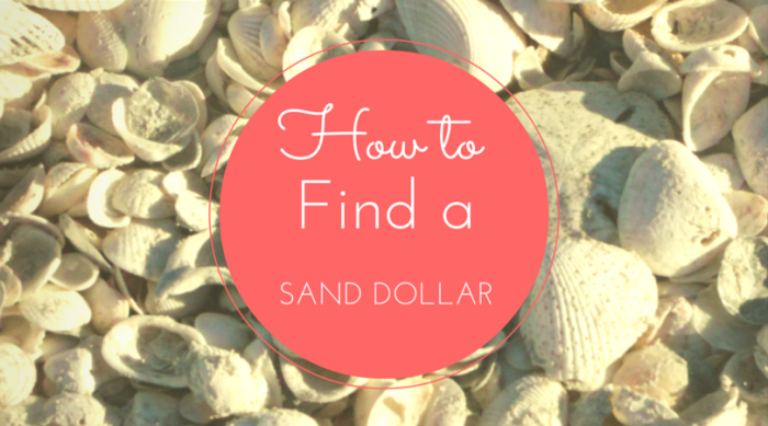 How To Find a Sand Dollar