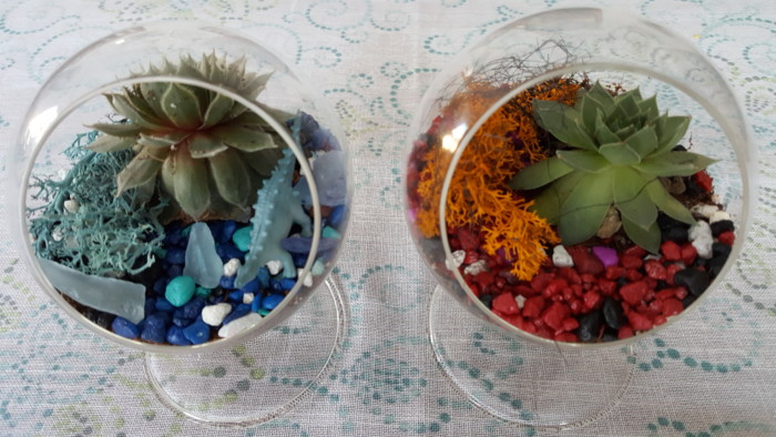thriving succulent terrariums